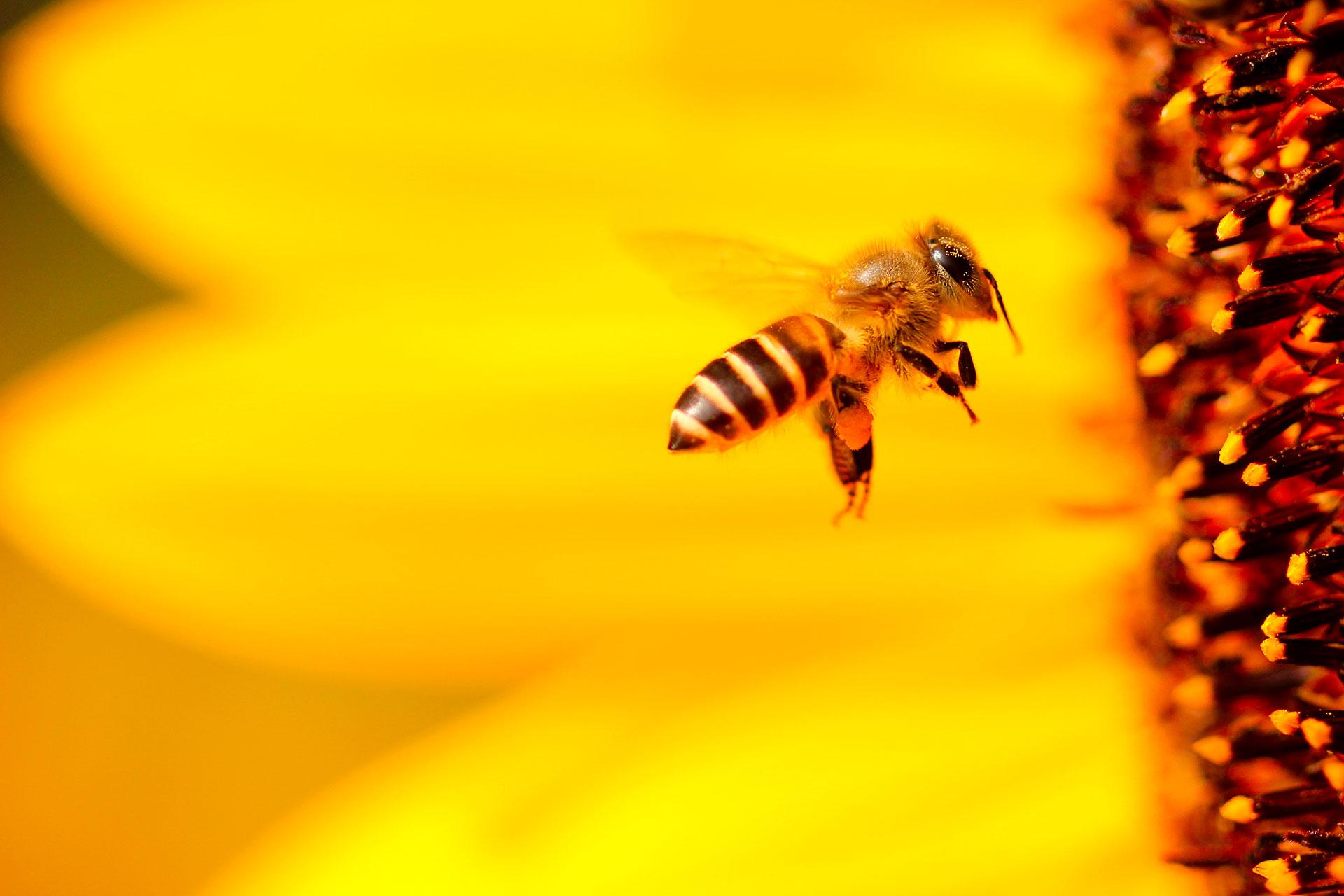 Oznámení: včely