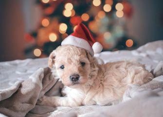 Hezké Vánoce, přeje všem svým čtenářům knihovna Bělov.