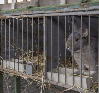 Výstava holubů a králíků