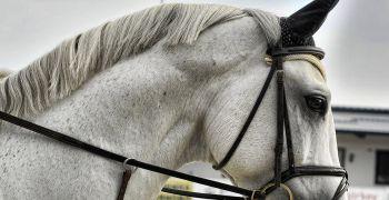 Napajedla a koně