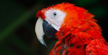 Burza drobného zvířectva a okrasného ptactva