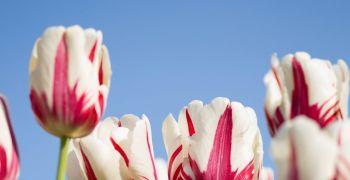 Floria léto