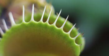 Živé pasti: výstava masožravých rostlin