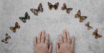 Entomologický výměnný den a výstava