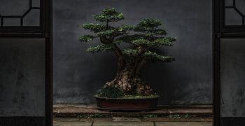 Floria podzim – Bonsaj 2021