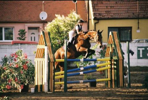 V sedle koní i poníků …