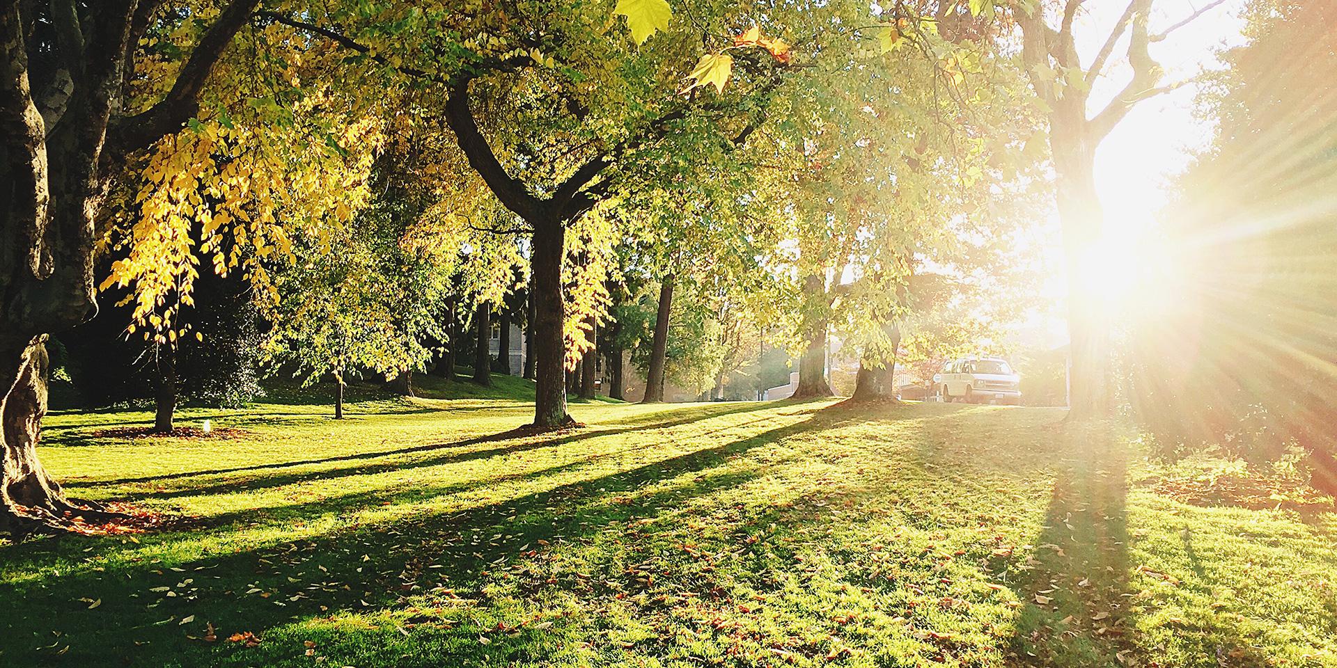 Léčivé stromy