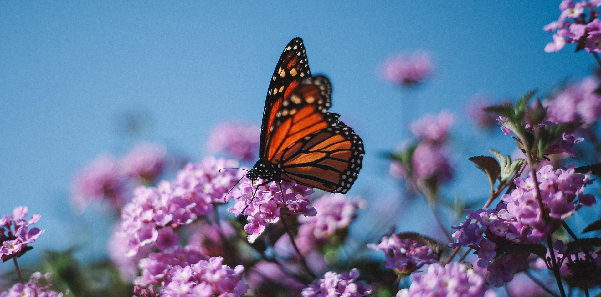 Entomologický výměnný den