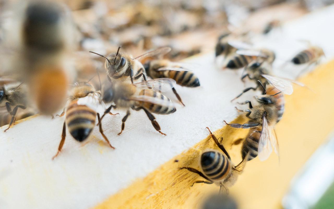 Mezinárodní včelařská výstava