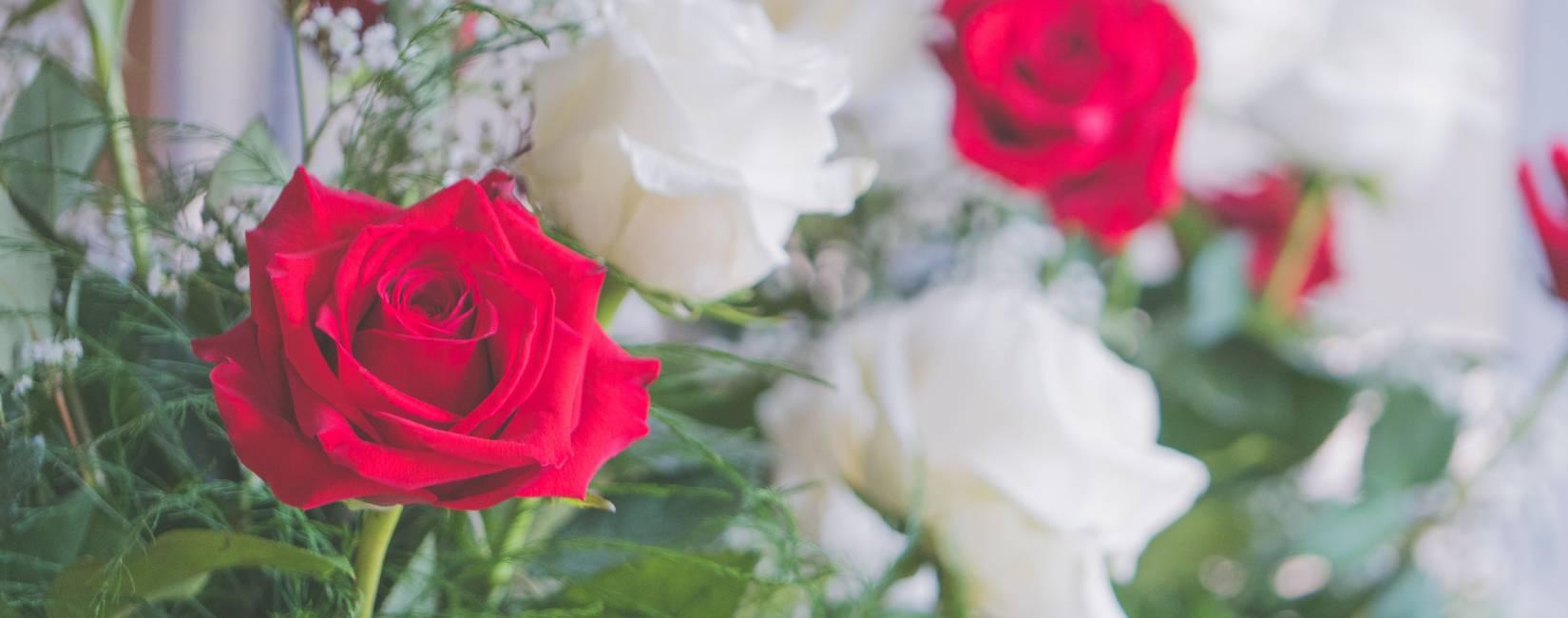 Růže pro paní hraběnku
