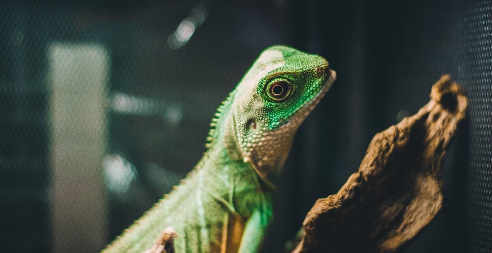 Prodejní výstava terarijních a akvarijních zvířat